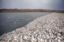 بی آبی ماهی های هورالعظیم را تهدید می کند
