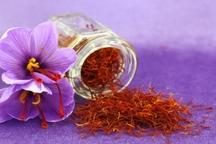 خرید تضمینی 10 تن زعفران در تربت جام