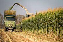 24 هزار و 150 تن محصول کشاورزی در حاجی آباد برداشت شد