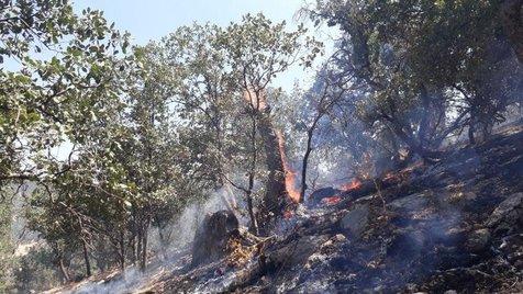 مهار آتش جنگل های گچساران