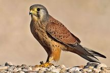 270 گونه پرنده در استان قم وجود دارد