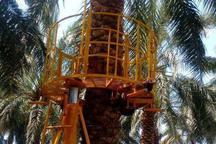 ساخت بالابر درخت خرما در بم کرمان برای اولین بار