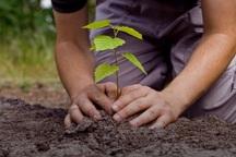 نهال های جنگلی رایگان به شرط تضمین تامین آب واگذار می شود