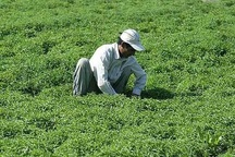 7000 مهندس کشاورزی و منابع طبیعی آذربایجان غربی بیکار هستند