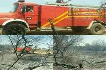 آتش سوزی در مزارع و بیشه زارهای دزفول