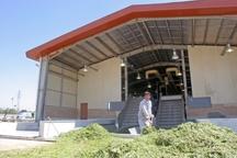 یک واحد تولید خوراک دام در سامان افتتاح شد
