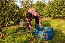 تولید 400 هزار تن محصولات باغی در مرکزی هدفگذاری شد