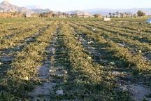 خسارت 2 هزار و 437 میلیارد تومانی خشکسالی به کشاورزی خراسان جنوبی