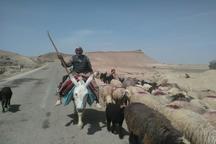 کوچ عشایر دشتستان به مناطق ییلاقی آغاز شد