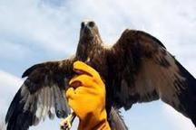 رهاسازی یک بهله عقاب تیمارشده در پلدختر