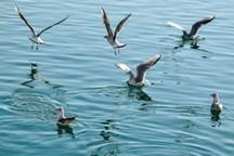 فعالیت 14 گروه پیشگیری و پایش آنفلوانزای فوق حاد پرندگان در استان مرکزی