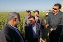 بیش از 20 هزار میلیارد ریال خسارت به بخش کشاورزی خوزستان وارد شد