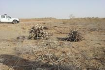 قاچاقچیان زغال، خودرو منابع طبیعی شیراز را به گلوله بستند