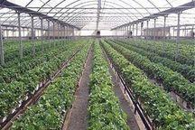 ۴۴۳ هکتار زمین برای شهرکهای گلخانه ای استان بوشهر اختصاص یافت
