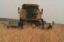 خرید بیش از ۳ هزار تن کلزا از کشاورزان خراسان شمالی