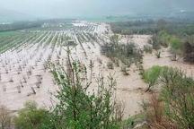 سیل 185 میلیارد ریال به بخش کشاورزی استان کرمانشاه خسارت زد