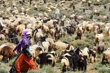 تولید گوشت عشایر کهگیلویه و بویراحمد680 تن افزایش یافت