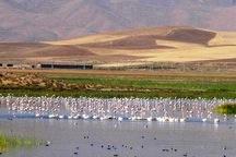حق آبه تالاب های نقده 50 میلیون مترمکعب است
