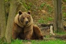 74 گونه جانوری مهره دار کشور در معرض تهدید است