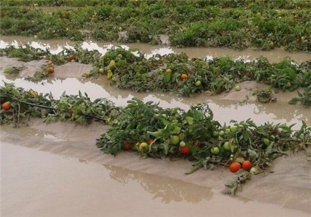 مشکل اصلی کمبود آب کشور سوءمدیریت است