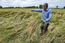 بارندگی 120 میلیارد ریال به کشاورزی اندیمشک خسارت زد