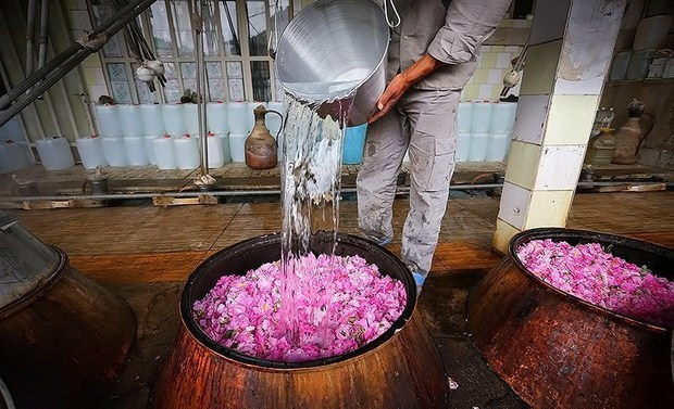 نخستین جشنواره گلابگیری در زابل دوم اردیبهشت برگزار می شود