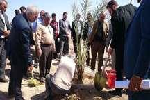 جنگلکاری در 210 هکتار از زمین های شلمچه خرمشهر آغاز شد