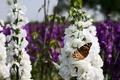میزبانی محمودآباد از جشنواره گل و گیاه زینتی