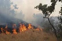 آتش سوزی عرصه های جنگلی کلاله مهار شد