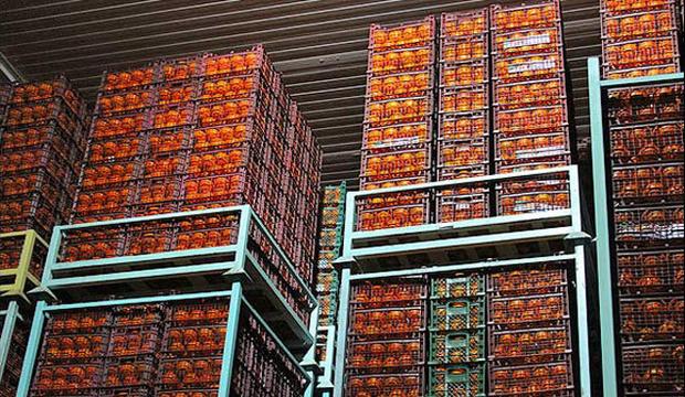 70 هزار تن میوه شب عید ذخیره سازی شد