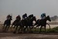 رقابت 61 رأس اسب در هفته چهارم کورس بهاره گنبد