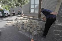 لانه دهها پرنده در هرس بی موقع درختان شیراز تخریب شد
