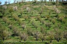 370 هزار هکتار از اراضی به مستثنیات کشاورزان کشور اضافه شد