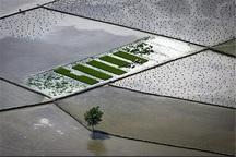 کانال هدایت آب در 85 هزار هکتار شالیزار گیلان ایجاد شد