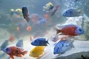 شهرک ماهیان زینتی کاشان همچنان بلاتکلیف است