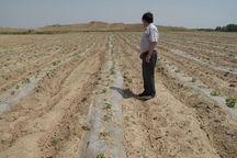 کشاورزان قزوینی بقایای پلاستیک را از مزارع جمع آوری کنند