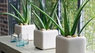 گیاهانی که باعث می شوند خواب راحت تری داشته باشید