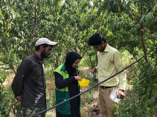 ۱۳ هزار لیتر مایع ضد مگس مدیترانهای در مهریز توزیع شد