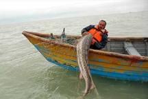 ذخایر ماهیان خاویاری خزر بهبود نیافته است