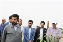ایجاد اشتغال جدید در خوزستان از طریق کاشت درختو تولید  چوب