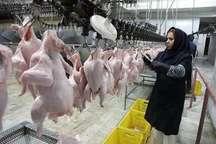 مرغ مازندران به3 کشور همسایه صادر می شود