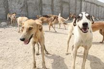 ورود گونه های وحشی به قم ناشی از حذف بی رویه سگ هاست