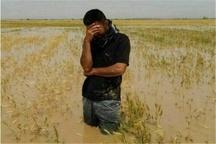 مستمری بگیران سیلزده صندوق بیمه کشاورزان حقوق ماه آینده را دریافت می کنند