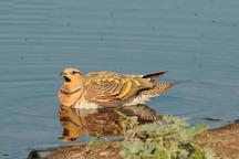 کشف 7 قطعه پرنده وحشی در غرب گلستان