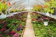 500میلیارد تومان تسهیلات برای احداث گلخانه در مازندران پرداخت می شود