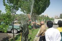 سم پاشی فضای سبز در زنجان تا پایان خرداد جریان دارد