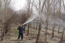 آغاز عملیات رایگان کنترل آفات عمومی در مزارع، باغات و مراتع کردستان