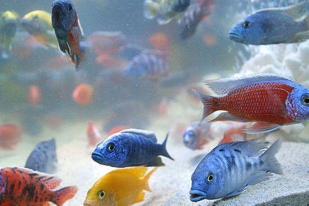 توسعه صنعت پرورش ماهیان تزئینی نیازمند حمایت است