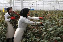 بانک کشاورزی زمینه اشتغال 94 زنجانی را فراهم کرد