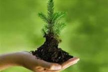1200 دانش آموز دلیجانی در طرح همیار طبیعت مشارکت کردند